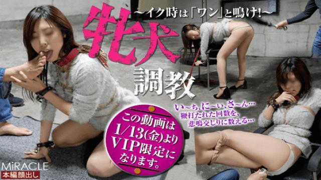 SM Miracle e0842 Female dog training At the time of cheeks it sounds